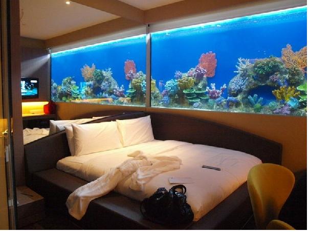 Tránh đặt bể cá cảnh trong phòng ngủ dễ khiến da chủ thất nghiệp
