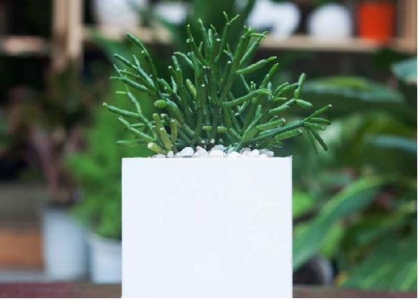 Cây xanh để bàn làm việc hợp mệnh Thủy