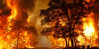 Giải mộng giấc mơ thấy lửa là điềm báo gì?