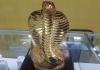 Tượng rắn phong thủy có ý nghĩa gì?