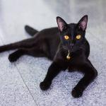 Ngủ mơ thấy mèo đen và mèo trắng là điềm báo gì?