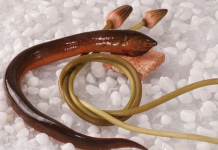 Mơ thấy lươn là điềm lành hay dữ?