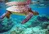 Ngủ mơ thấy rùa là điềm báo gì?