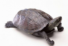 Linh vật giúp cải thiện sức khỏe, tăng tuổi thọ