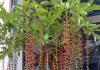 Loài cây nên trồng ở giếng trời, giúp cầu tài lộc sức khỏe