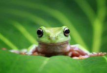 Giải mã chi tiết ý nghĩa giấc mơ thấy ếch