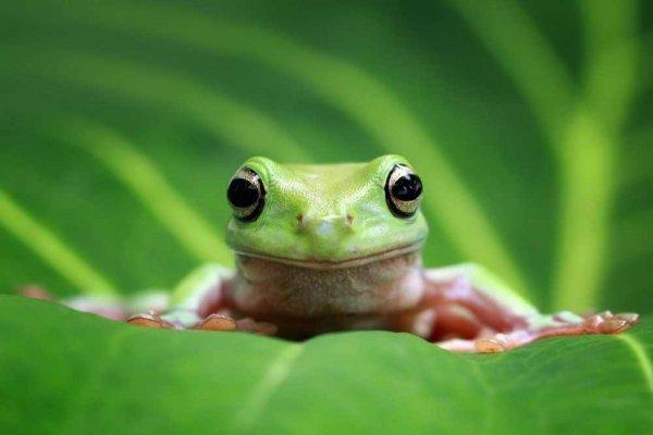 Ngủ mơ thấy ếch là điềm báo gì?