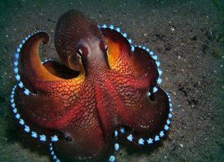 Mộng-thấy-bạch-tuộc-đánh-con-gì-min